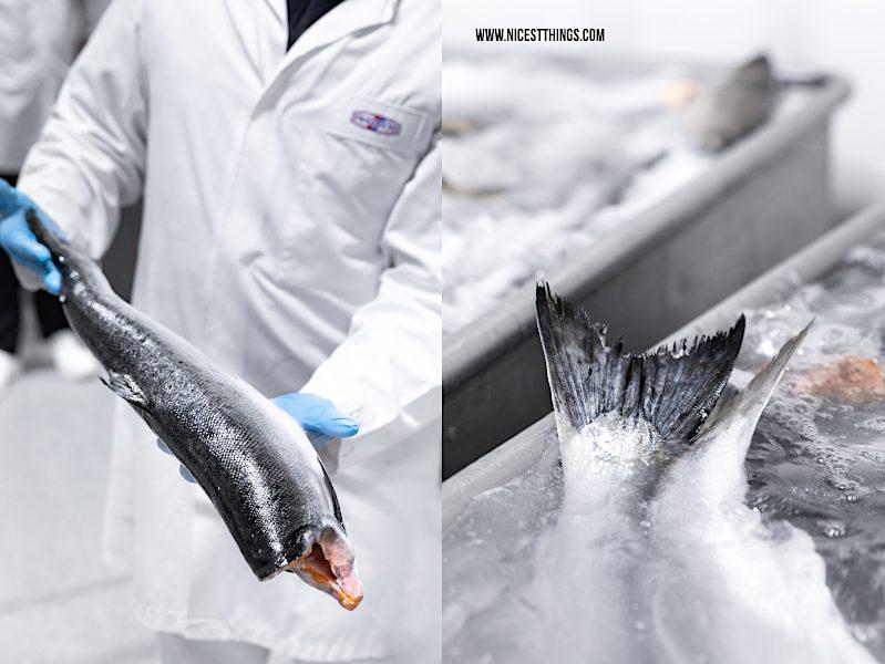 Friedrichs Fisch Feinfisch Manufactur Werk Waren Müritz Alaska Wildlachs