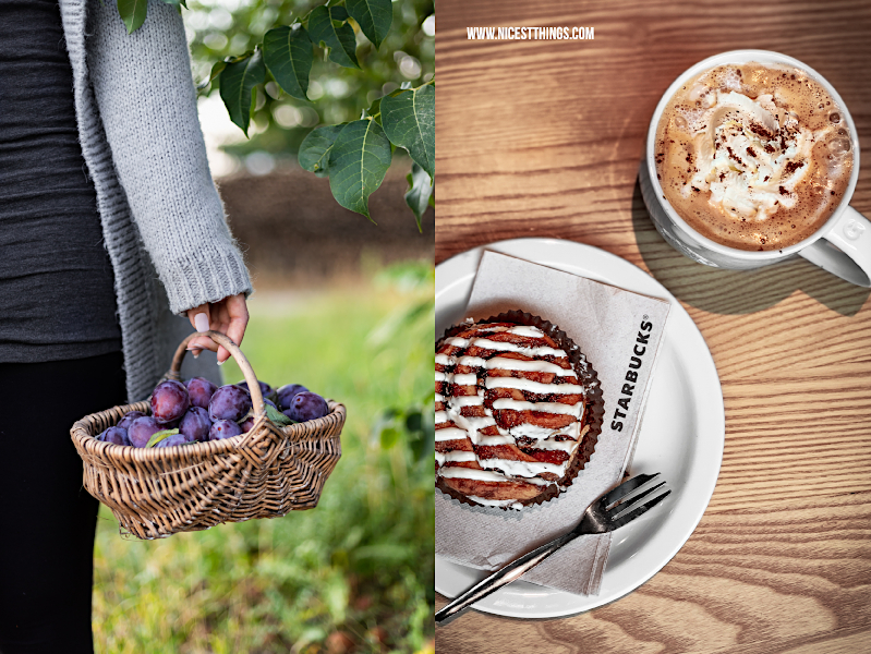 Herbst Zwetschgen pflücken in Korb Starbucks Pumpkin Spice Latte