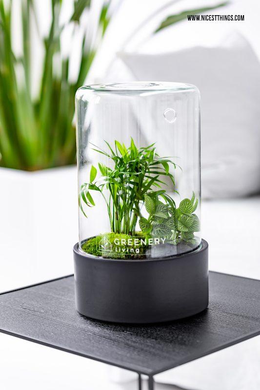 Flaschengarten anlegen Biotop im Glas selber machen DIY Flaschengarten Loft Pflanzen im Glas Greenery Living #flaschengarten #diyflaschengarten #biotopimglas #greeneryliving #loft #dekotrend #urbanjungle #pflanzenimglas